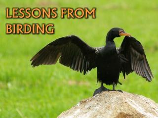 Lessons_From_Birding.ppt